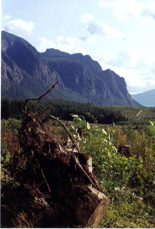 Timber cut at the shoulder of Mt. Josiah