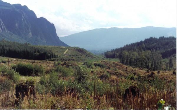 Timber cut near Mt. Josiah